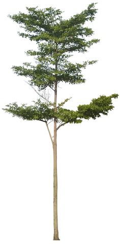 20 Tree Png Images for architecture, landscape, interior renderings @ dzzyn.com #Dzzyn