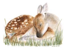 Deer Art for Woodland Nursery, Deer Print Baby Room Decor, Fawn Art for Baby Boy Deer Nursery, Deer Sleeping, Green, Gray - 11x14