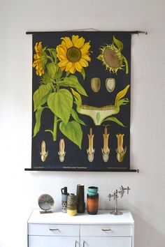 Vintage botanical pull down chart map Jung Koch by MightyVintage