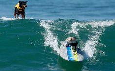 """""""Surf-City-Surf-Dog"""""""