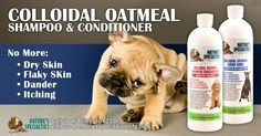 Does your dog have dry and flaky skin due to weather change? This is the season! Luckily, you have the Colloidal Oatmeal family to help you out! #dog #grooming #groomer #pet #shampoo #conditioner #family #natural #love #life