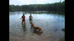 Swimming (Plavání) II. 22.5.2012 Swimming, The Originals, Videos, Dogs, Animals, Swim, Animales, Animaux, Doggies