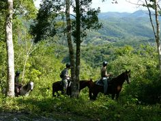 Horseback Riding through Jungle Trails http://www.cavesbranch.com/belize-horseback-riding