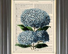 BOGO SALE  Blue hydrangea hortensia bunch printed as dictionary art print on old antique recycled dictionary book page.  Item No. 564