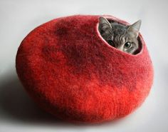 Cocoons for a cat