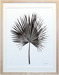 This Palm Frond would be perfect for a gallery wall! | Serena  Lily
