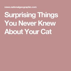 Surprising Things You Never Knew About Your Cat
