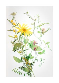 A Bunch of Wild Flowers Wall Art 10x14 | Modsy Product | by Artfully Walls