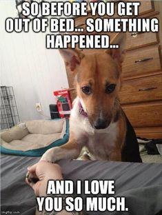 Funny dogs More #DogObedienceTipsandAdvice #funnydogs