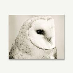 Barn Owl Canvas / gallery wrap / barn owl by BokehEverAfter, $55.00