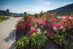 Terra Flower Power | Muszyna