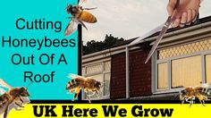 Cutting Honey Bees Out Of A Roof