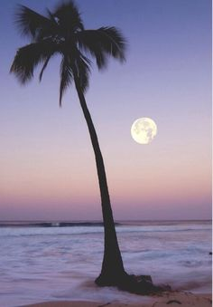palm tree in moonlight