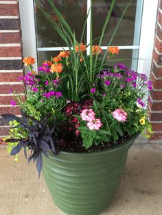 Plant garden flower pot