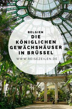 Das tropische Refugium wirkt wie eine Stadt aus Glas, die sich auf vier Hektar erstreckt. Wunderschön sind die Arkaden und Gänge, die Bögen und Streben, die fast zu schweben scheinen und aus jeder Richtung eine neue, beeindruckende Perspektive bieten. Aber es gibt nicht nur Gutes zu berichten über die Gewächshäuser in Laeken. #Belgien #Brüssel