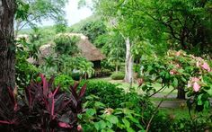 Chaa Creek Lodge in San Ignacio, Belize.  I honestly did not want to leave this place - it is truly something special.