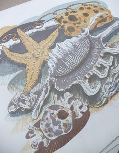 Angie Lewin - Scorpion shell - lithograph