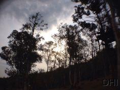 Pinus Mangunan, Yogyakarta, Indonesia