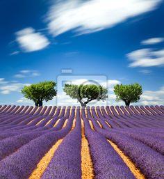 Sticker lavande de provence frankrijk / lavendel veld in provence, frankrijk - bouquet • Muursticker • PIXERS.nl