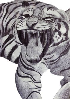 Tiger roar - Art Print by J Bradford Illustration