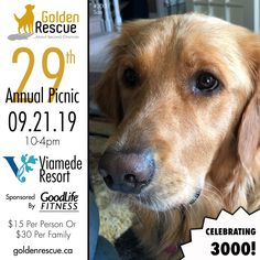 Sam #3000 is wants to personally invite you to the 29th Annual Golden Rescue Picnic, sponsored by GoodLife Fitness! It's taking place on Saturday September 21st at the beautiful Viamede Resort! You don't want to miss this incredible day where we are Celebrating 3000! To learn more or to reserve your spot, please email picnic@goldenrescue.ca   #goldenretriever #rescuemissionoflove #rescuedog Rescue Dogs, Invite, Life Is Good, Picnic, September, 21st, The Incredibles, Celebrities, Fitness