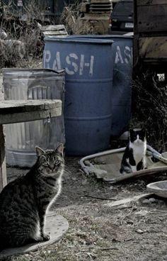 Junk Yard Cats