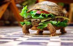 Afbeeldingsresultaat voor grappig dier