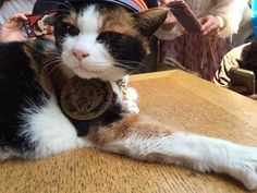 Japan's Tama Train is Adorably Cat Themed | Mental Floss