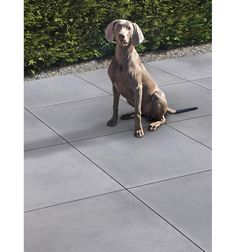 Betontegel met facet 60x60x4 cm Grijs - afbeelding 2 Garden Inspiration, Labrador Retriever, Chill, Backyard, Dogs, Silver, Animals, Outdoor, Product Design