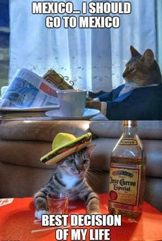 Lets go to Mexico! See More Funny and Cute Cats Pics at: http://lolstash.blogspot.com :]