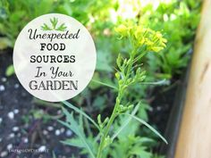 Unexpected food sources in your garden - delicious ideas we overlook at empressofdirt.net/unexpected-food-sources/