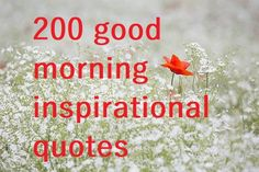 New 200 good morning inspirational quotes that will make you feel fresh and happy at the beginning of your day. Share these 200 good morning inspirational Make You Feel, How Are You Feeling, Good Morning Inspirational Quotes, Halloween Fun, Make It Yourself, Feelings
