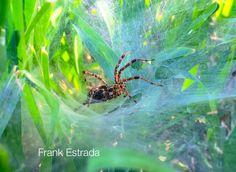 Tejiendo. #weaving #Spider #home #autumn