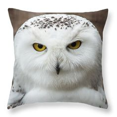 """Sold - Dale Kincaid sold a Throw Pillow - 16"""" x 16"""" of Golden Eye to a buyer from Incline Village, NV."""