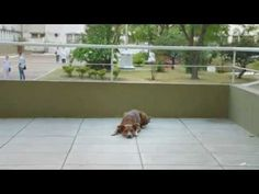 Heartbreaking PSA Proves A Dog's Loyalty Never Ends http://www.dogsaremytherapy.com/