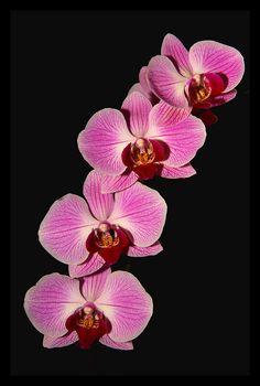 ~~ pinkbranch ~~