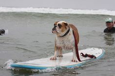 California Cool:  even our dogs surf check out this video:  http://www.youtube.com/watch?v=cqxTUxzOceE