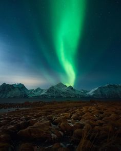 5,057 отметок «Нравится», 80 комментариев — Northern Lights & Landscapes (@torivarnaess) в Instagram: «Northern lights above the Lyngen Alps. And yes, that are the famous Trump wigs  #nordicphototours…»