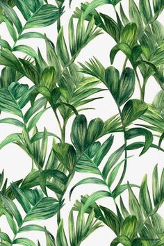 Tropical leaves by Urban WallArts Motif Tropical, Tropical Pattern, Tropical Leaves, Tropical Prints, Palm Print, Cute Wallpapers, Wallpaper Backgrounds, Iphone Wallpaper, Wallpaper Plants