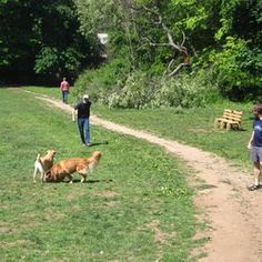 Winslow is a park in the Center of the Town of Westport, CT where you can take your dog off leash.