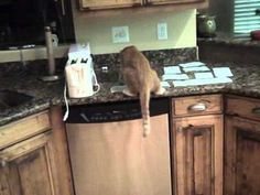 How to keep cats off the counter  #cat #cats #prank