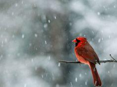 cardinal thoughts