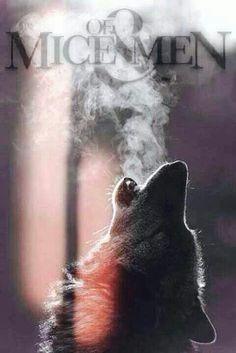 Of Mice & Men AND A Wolf!? This picture is P E R F E C T ! <3