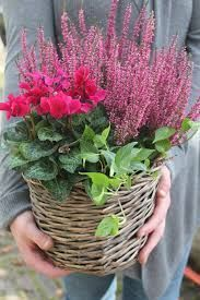 Best Garden Decorations Tips and Tricks You Need to Know - Modern Flower Cart, Winter Garden, Winter Flowers, Flower Pots, Plants, Balcony Planters, Fall Planters, Fall Flowers, Winter Plants