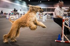 A snapshot from the Rose City Classic Dog Show!