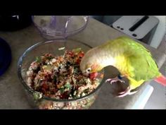 Essential Parakeet Diet  and Food: What To Feed A Budgie (Parakeet) | PetHelpful