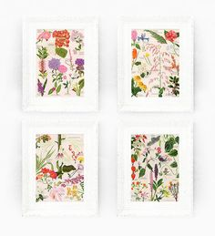 7x9 Lily Set of 4 Vintage Botanical Prints by ThePrintMakers