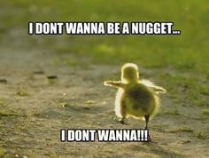 Run, little chick! RUN!