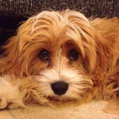 Look into my eyes, my puppy dog eyes…
