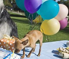 7 tips for hosting your own National Dog Party Day shindig!